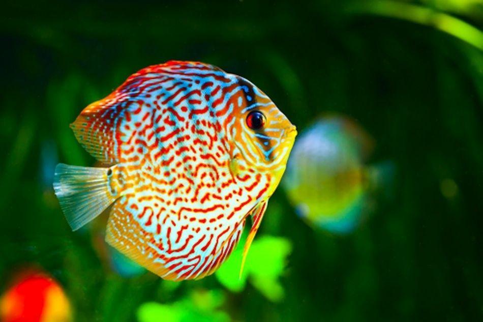 Ползи от аквариум у дома